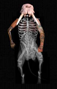 2008 - Walrus Man - Digital Collage